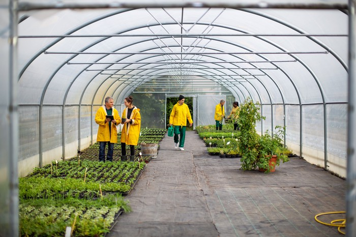 Several people working in a greenhouse.
