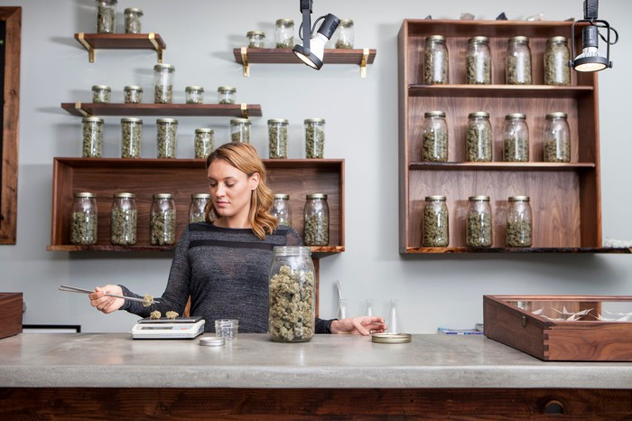 A worker at a cannabis dispensary weighs two pieces of dried marijuana flower while standing behind a counter.