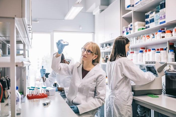 Un groupe de trois scientifiques travaille sur des paillasses de laboratoire tandis que l'un tient une boîte de Pétri à la lumière.