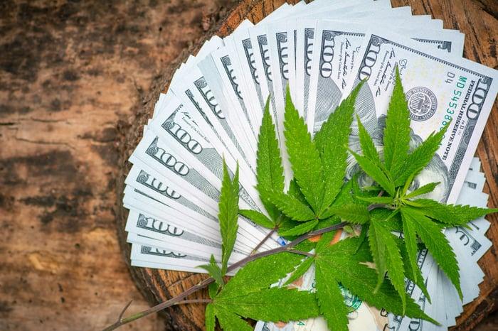 Marijuana leaves on top of $100 bills.