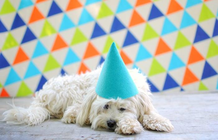 A sad dog wears a party hat.