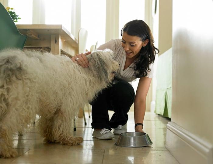 A person feeding a shaggy dog.