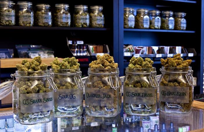 Cinq pots transparents sur un comptoir de dispensaire remplis de variétés uniques de têtes de cannabis séchées.