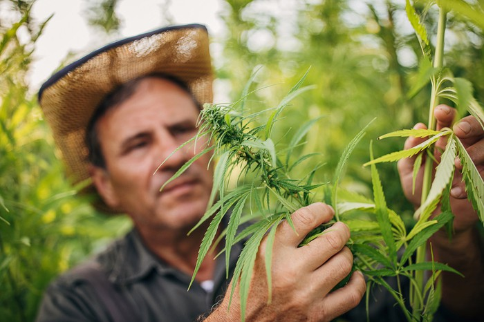 3 Top Pot Stocks to Watch in August