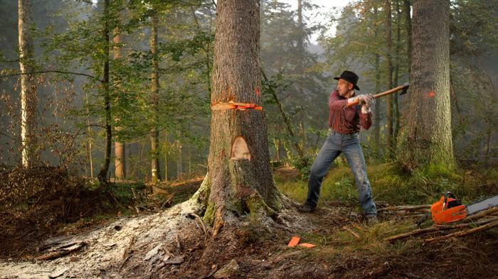Lumberjack cutting down a tall tree.