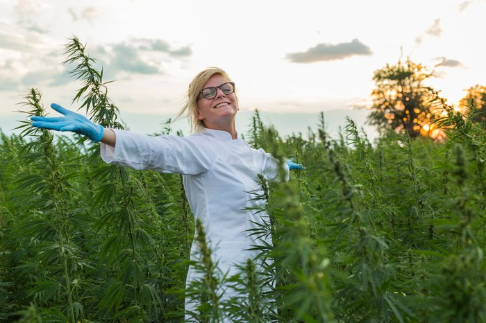 3 Offbeat Cannabis Stocks Investors Should Consider