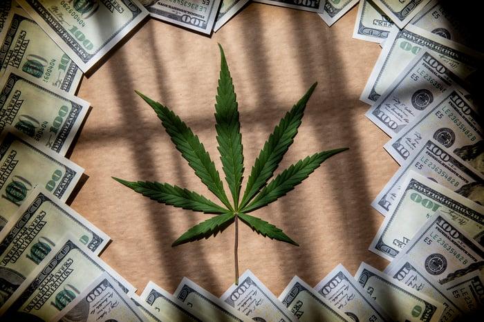 une feuille de marijuana entourée de billets d'un dollar américain.