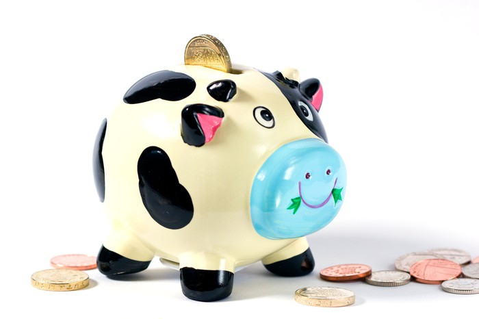 A cow-colored piggy bank with coins around it.