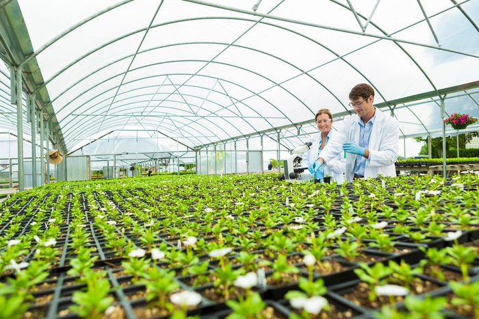 Two scientists working in a greenhouse.
