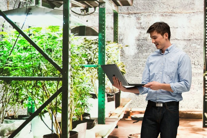 Man with laptop in marijuana grow room