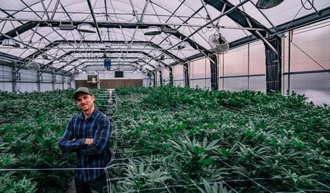 person standing in cannabis greenhouse full of plants