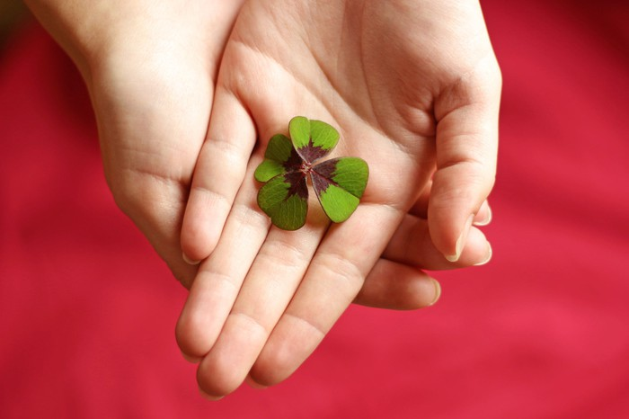 A lucky four-leaf clover cupped in two hands.