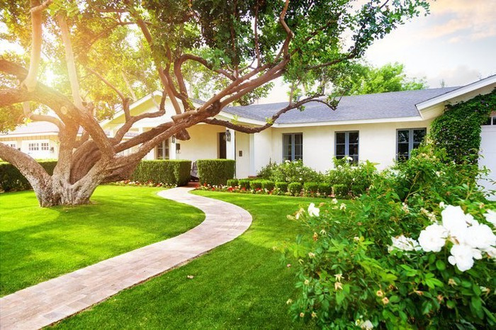 The sunny front yard of a house with a big green lawn and a large tree.