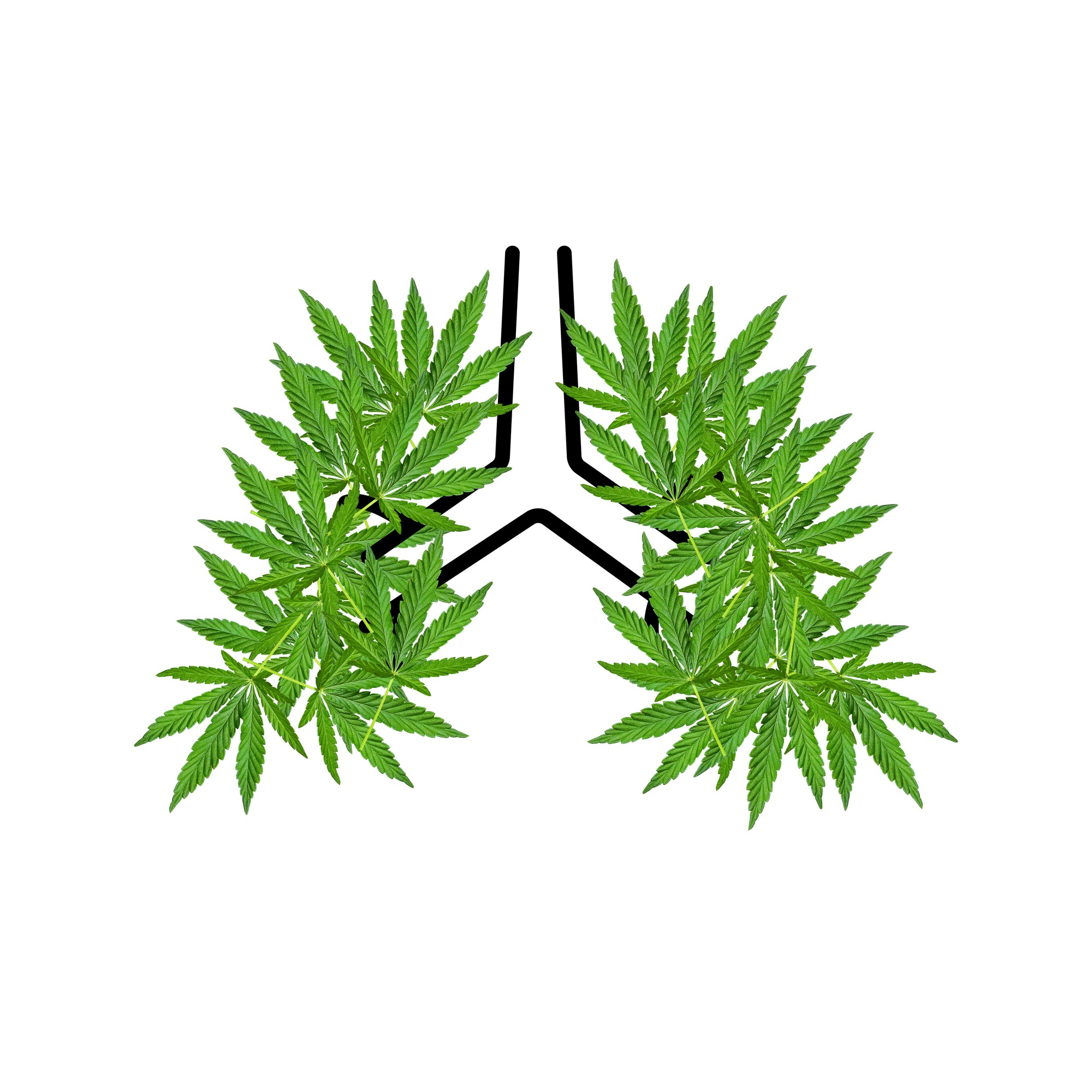 A drawing of lungs where the lungs are marijuana leaves